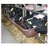Feed Tubs & Troughs